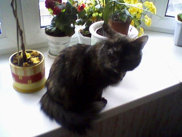 ...полугодовалым котенком залезла к нам в электрический щиток в подъезде, спасаясь от своры бездомных собак...