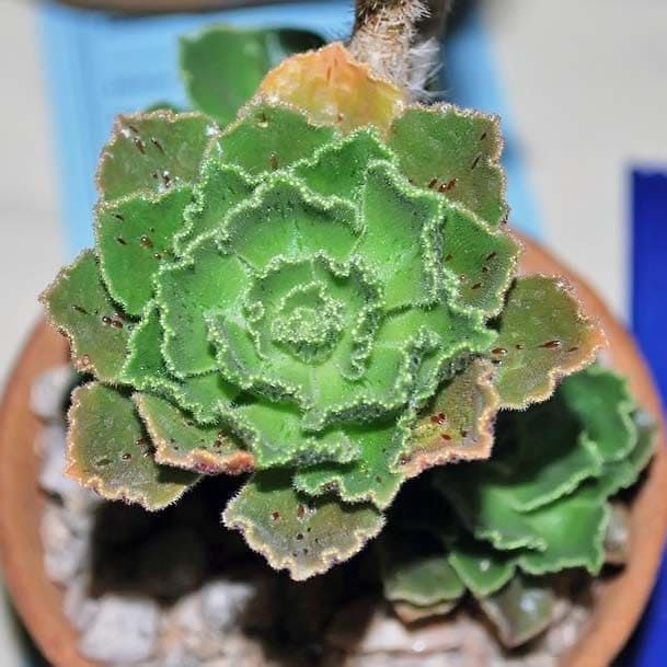 удобрение для комнатных растений npk 7-3-6