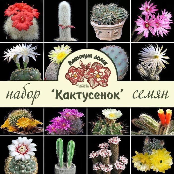 набор семян кактусы маммилярия ребуция цереус