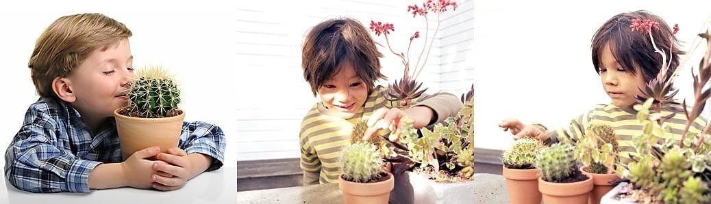набор семян детский: актусенок, кактус