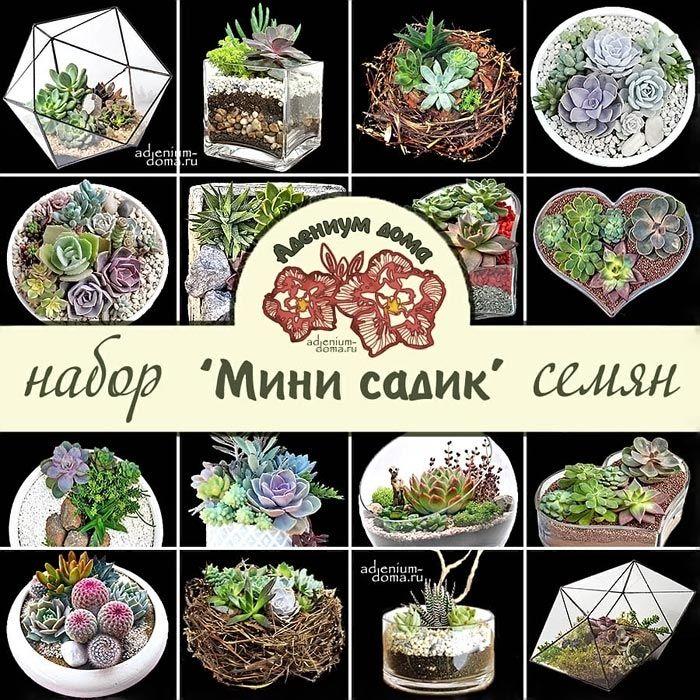 Набор семян суккулентов 'МИНИ САДИК'