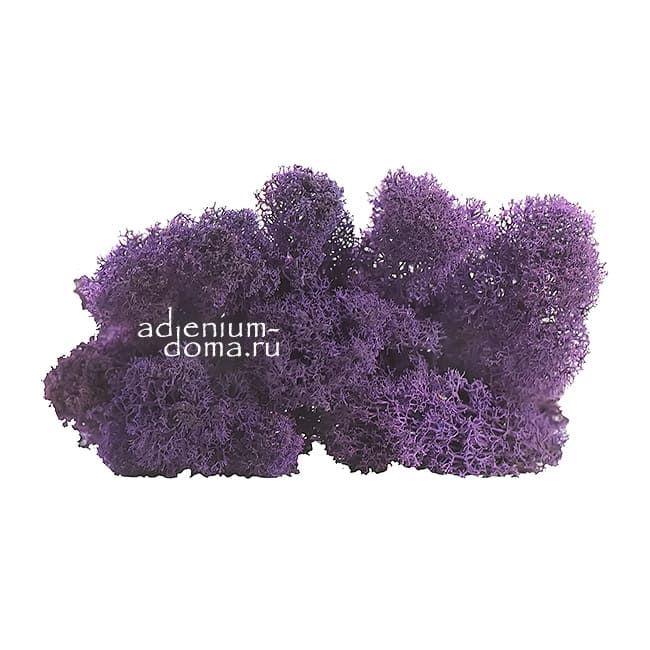Стабилизированный МОХ ЯГЕЛЬ фиолетовый 1