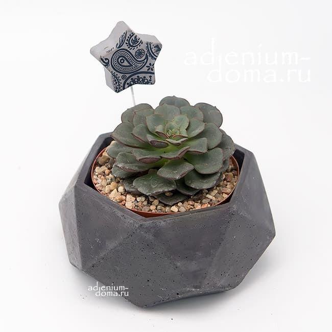 Горшок из бетона ПОЛИЭДР M 1