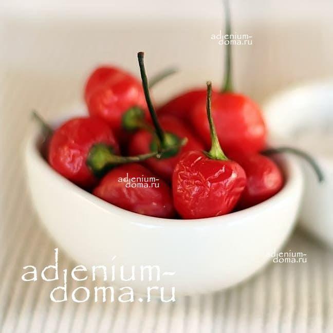 Capsicum ANNUUM DALLE KHURSANI Chili Cherry pepper Вишневый Перец стручковый овощной чили мексиканский кайенский 2