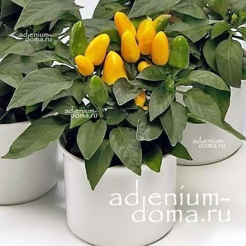 Capsicum ANNUUM mix YELLOW Перец стручковый овощной чили мексиканский кайенский 2