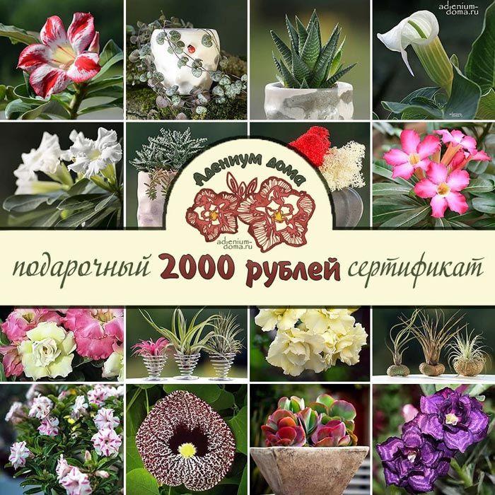 Электронный подарочный СЕРТИФИКАТ 2000 рублей 1
