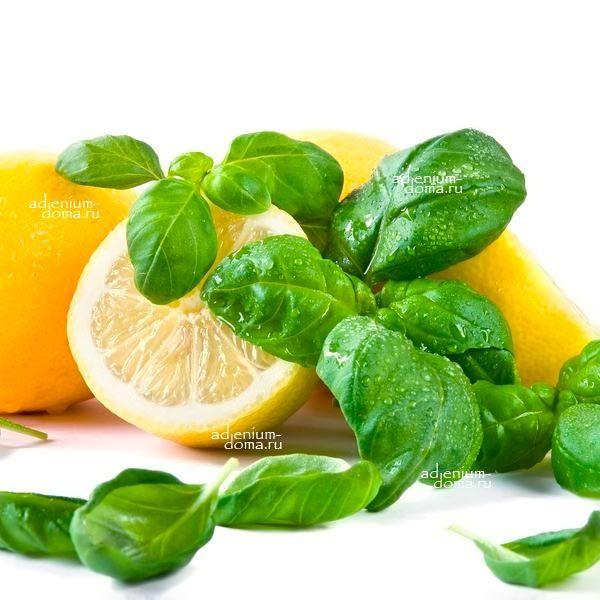 Фрукты для похудения лимон